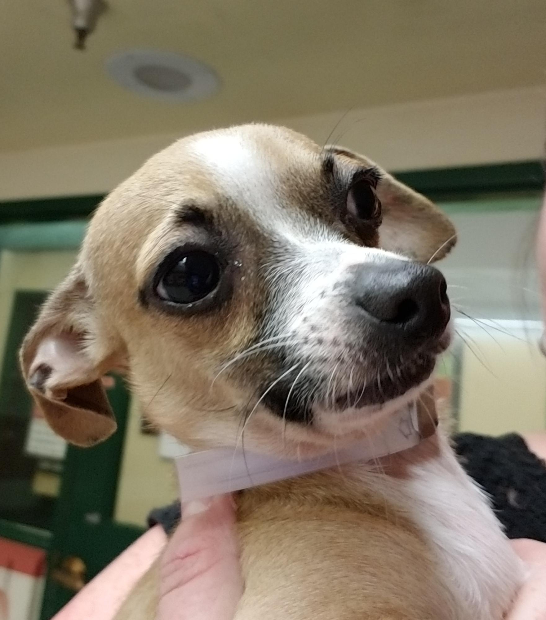 Georgie-Adopted