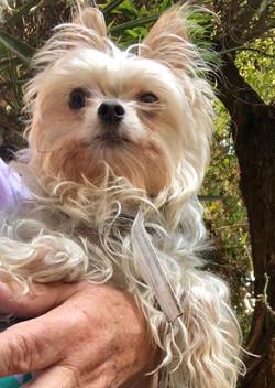 Lulu-Adopted