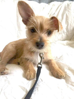Wally-Adopted