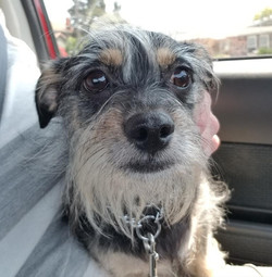 Tinker-Adopted