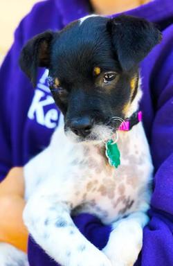 Leela-Adopted