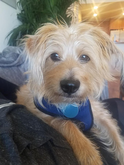 Barkley-adopted