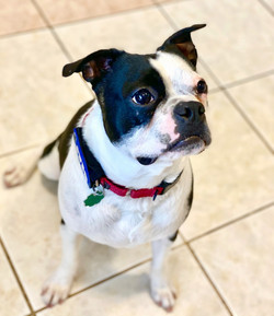 Domino: adopted