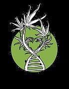DNA-HEMP%20(1)_edited.png