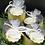 Thumbnail: Coconut & Pineapple Sugar Scrub