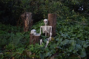 Skeleton siting in a forest