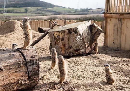 Meerkat Lookout at Lee Valley Park Farms