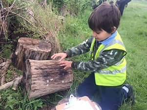 Young child looking under log