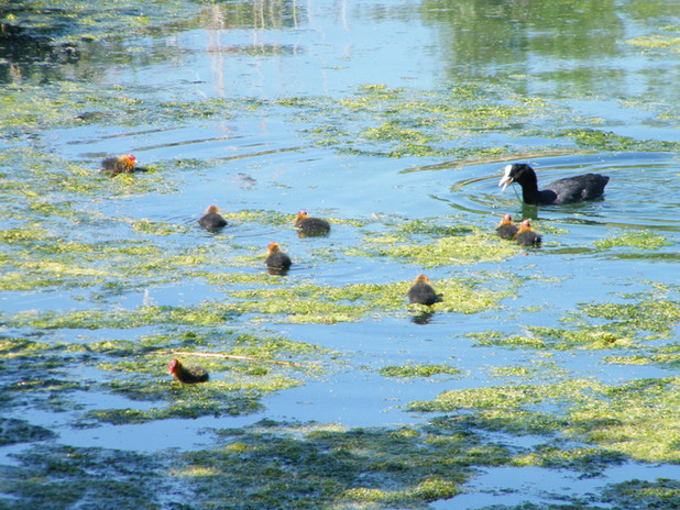 oss_100000_waterworks-nature-reservejpg