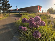 View of Lee Valley VeloPark outside with purple flowers