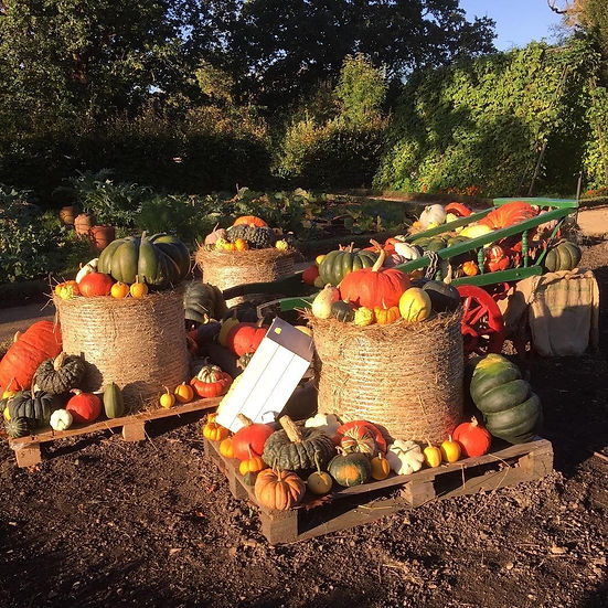 Different types of pumpkins piles on a wheel barrow