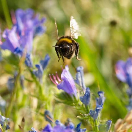 190704_os_waterworks_bumblebee_gilegreen