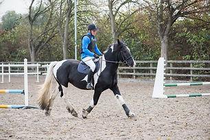 Horse in outdoor menage