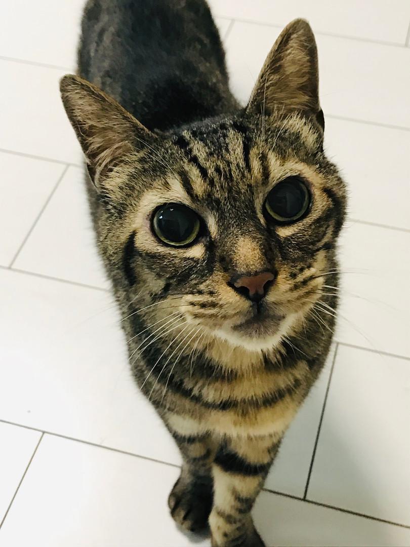 社長は猫8匹飼ってるよ☆癒しスタッフです☆