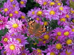 Butterflytime