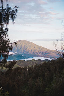 Forrest Mountain.jpg