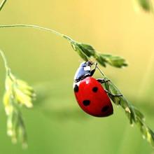 Pesticide selection criteria