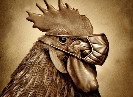Беларусь ограничивает ввоз птицы из трех областей России из-за птичьего гриппа
