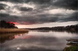 Sunset Lake Murmuration