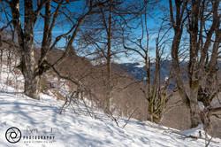 Ski Slopes Woodland Walk Views