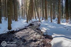 Titisee woodland walk
