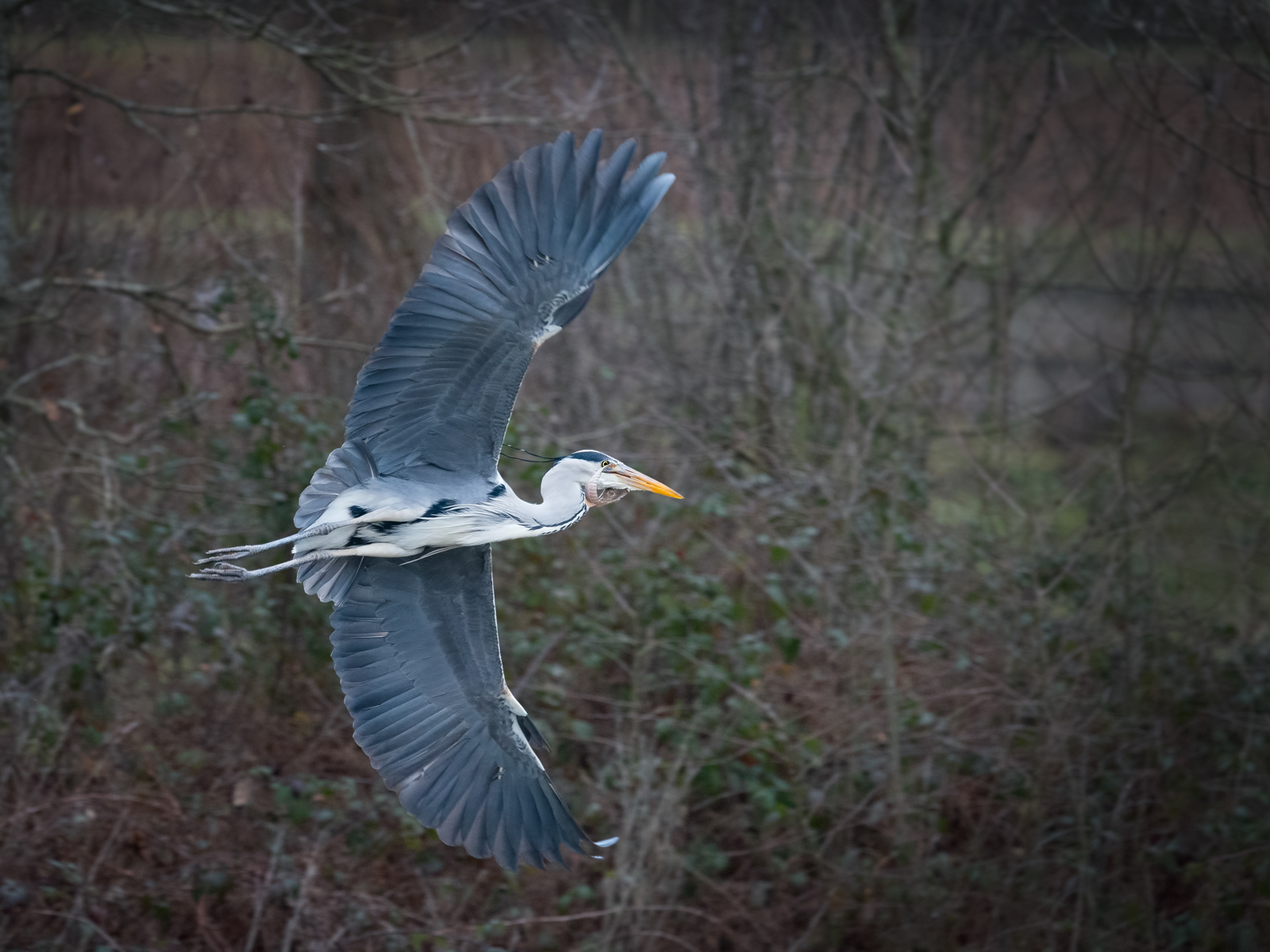 Heron flight with Catch