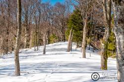Ski Slopes Woodland Walk