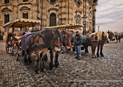 Dresden Horse and Cart Rides