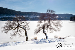 Titisee Lakeside View