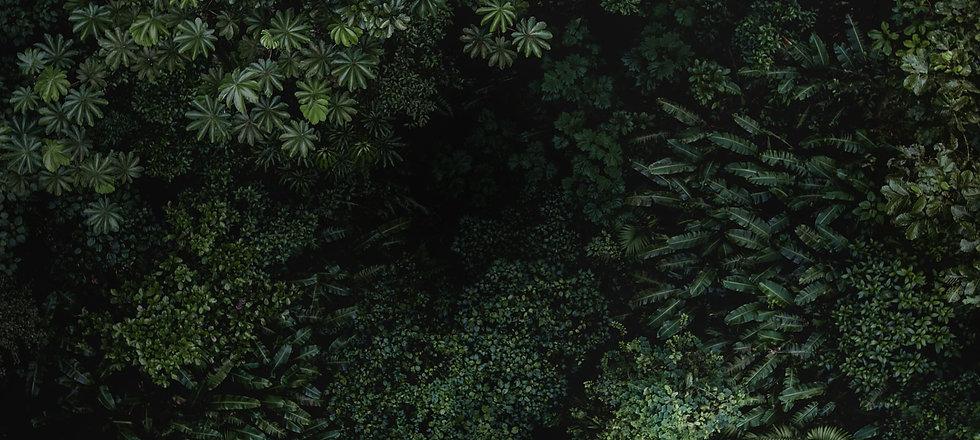 junglebg_v2.jpg