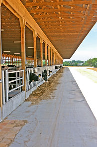 Heifer, herd, farm, feed, comfort, dairy, barn,