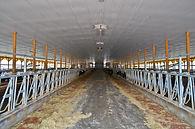 Waybright, Gettysburg, Sand, Tunnel Ventilation, dairy, freestall