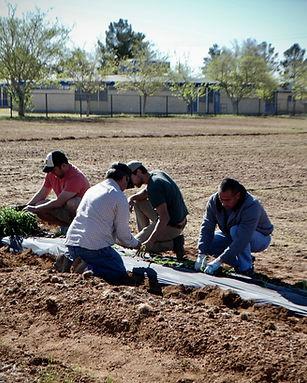 NIFI farming