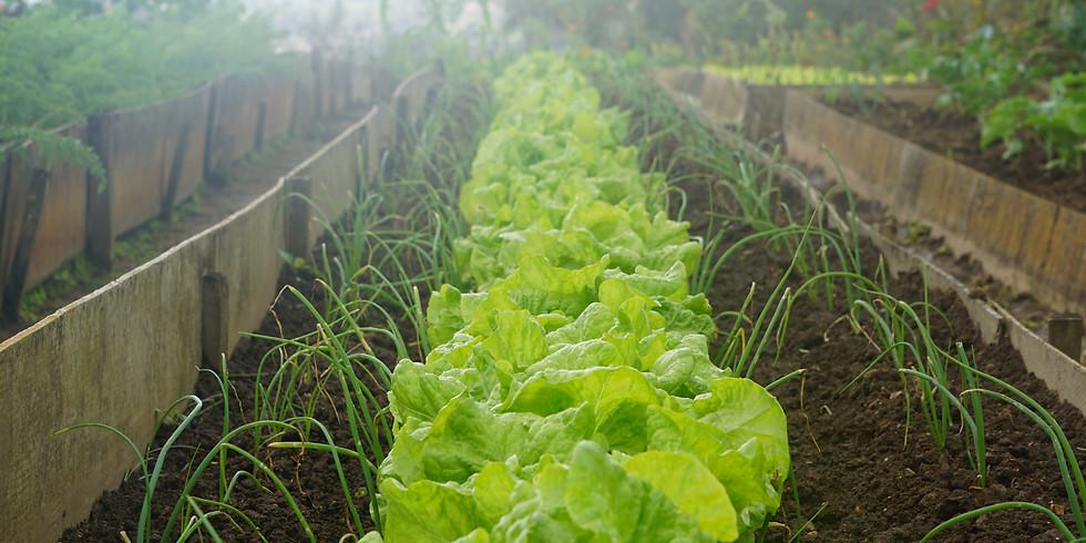 Rainwater Harvesting Design Workshop and Garden Talk