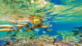 Hardy Reef 3.jpg