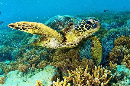 Hardy Reef 2.jpg