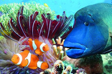 Hardy Reef 1.jpg