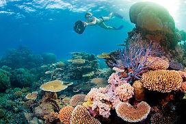 Hardy Reef 4.jpg
