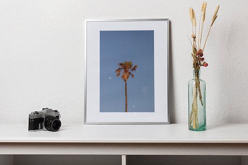 A palm tree in Tarifa, Spain, June 2018