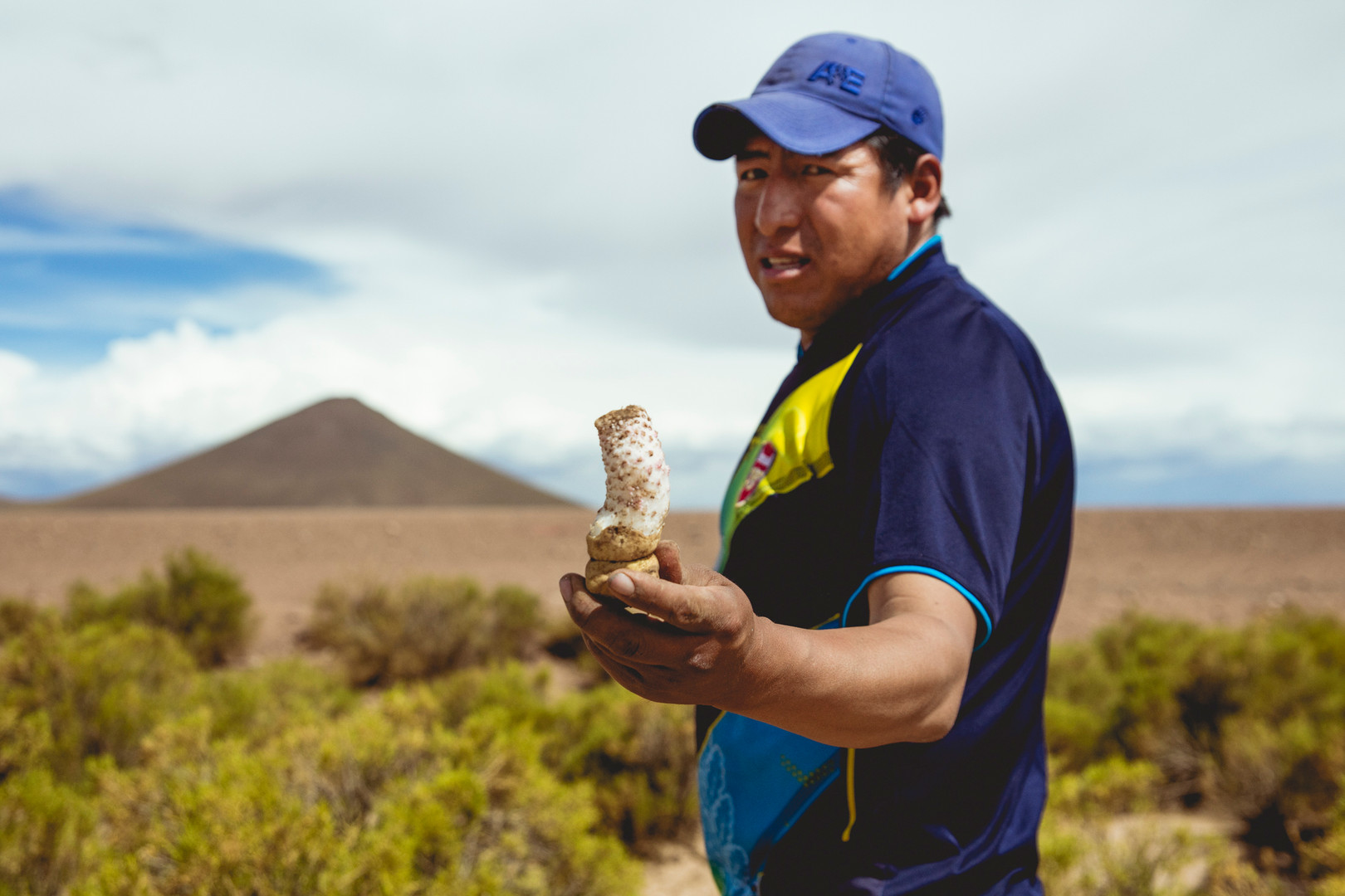 A man is holding a typical potato from the region of Uyuni, Bolivia. February 2016