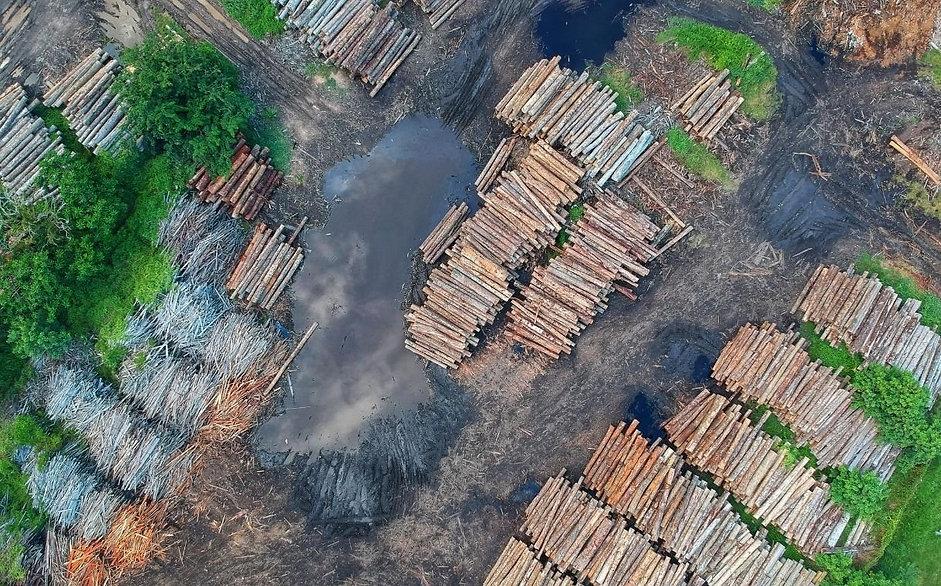 deforestation image.jpg