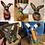 Thumbnail: Bunny Needle Felting Workshop