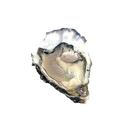 美國太平洋蠔 Pacific Rock(6隻/6pcs)