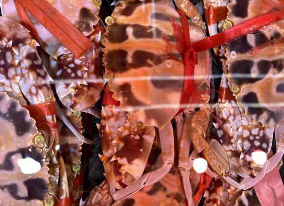 紅花蟹 (斤)