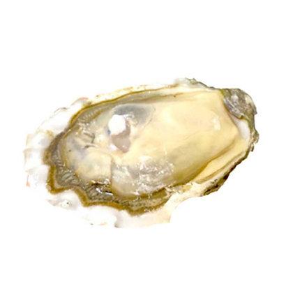 美國大珍珠蠔 American Pearl (1隻/1pc)