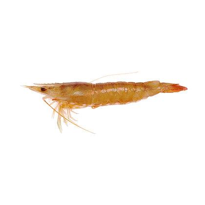 海中蝦(半斤/ 0.5catty)