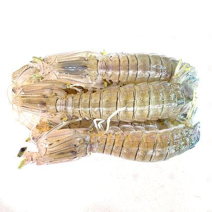 青瀨尿蝦(1斤 約6隻 /1catty around 6pcs )