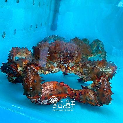 北海道花咲蟹(1斤/ 1catty)