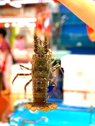 青龍蝦(1斤/ 1catty)