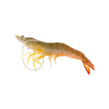 海白蝦(半斤/ 0.5catty)